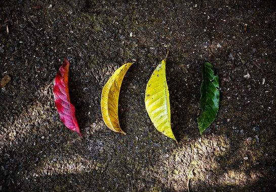 how-to-use-inbound-marketing-to-nurture-leads-nurturing-title-image